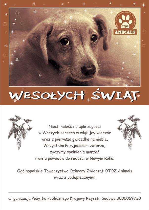 Karka Świąteczna przedstawiająca psa mieszanej rasy spoglądającego smutnie w twoją stronę. Oraz życzenia