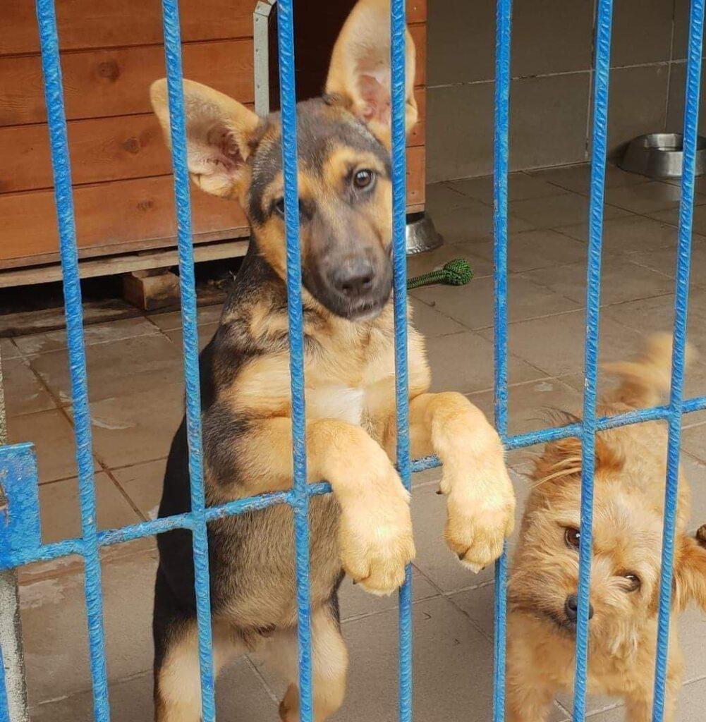 Uratowany psiak spoglądający zza krat schroniska