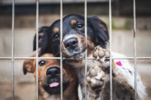 Psy przy kratach schroniska. Rozliczenie pit-37 moze uratowac zycie zwierzat