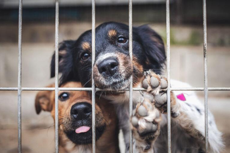 Psy przy kratach schroniska