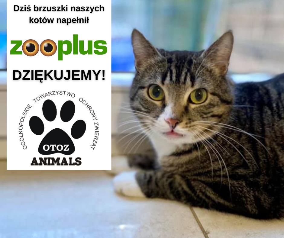 zooplus.pl - pomaga nam nakarmić koty i psy, wspiera nasze działania ochrony zwierzat
